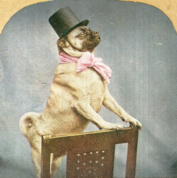 Pug Dog in Top Hat Litho Stereoview