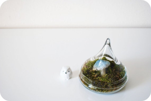 vintage / / APOTHECARY / /  terrarium / glass container