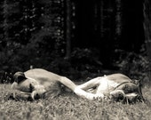 Two Boxer Dogs Snoozing - 8x10 Black and White Photo Print