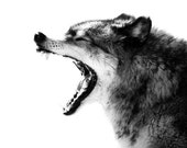 Intense Gray Wolf Portrait Photo - 8x10 Black and White Wild Animal Nature Photo Print - Wolf Art Minimal - Gift for him or her