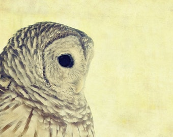 """Owl Portrait Photo - """"Lovely Lucy"""" - 5x7 Bird Nature Photography Soft Pale Yellow Brown Colors Fine Art Print"""