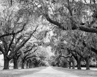 Avenue of Oaks, Charleston, South Carolina Photo - Oak Trees Spanish Moss - 11x14 Black and White or Color Nature Photo Print - Home Decor