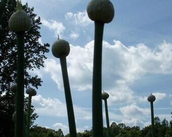 Onion Flowers In Sky Art Shot
