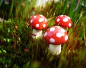 Three Mini Red and White Spotted Mushrooms
