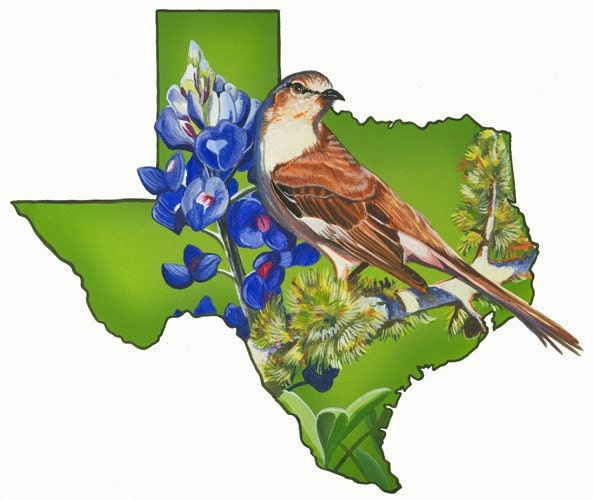 Texas State Flower Is A BluebonnetTexas State Bird Is A