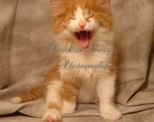 Crazy Cats Photo Card - Get well - Laugher is the best medicine