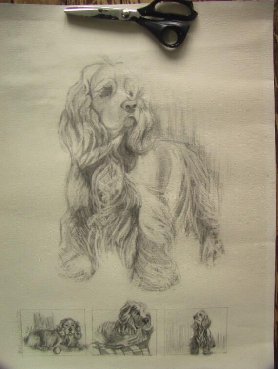 cocker spaniel illustration