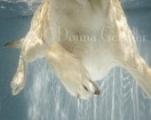 Daisy Swims Art Print - Dog photography, dogs underwater, lab swimming in baby blue water. Gift for any pet lover.