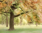Ode to Summer - Art Print.  Tree photography, summer green leaves with hints of autumn's beginnings.  Landscape photography.