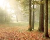 Morning Light Art Print 8x10.  Autumn landscape photography with serene morning light shining through the trees.