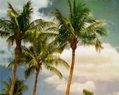 Beach Dreams IV Art Print - Palm tree photography, florida, vacation, decorative art, beach art, beach photography.