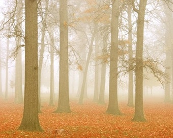 Misty Morning in Orange - Art Print.  Fall photography, autumn, tangerine orange, forest, woodlands, landscape photography.