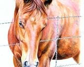 Chestnut Arabian Quarter Horse Art Print of Watercolor Painting Gift for the Horse Lover