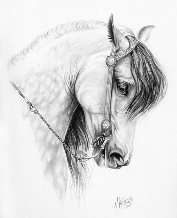 Original ANDALUSIAN horse art drawing Spanish Glory pencil artwork graphite baroque