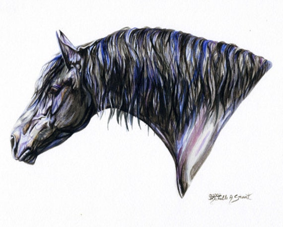 Friesian Horse Friesian Horse Art Print of