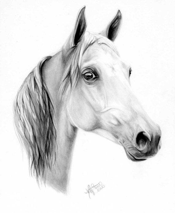 Arabian Horse Pencil Drawings Horse Pencil Drawing Art