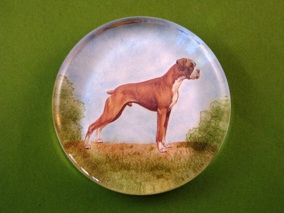 Boxer Dog Portrait Large Round Glass Paperweight Home Decor