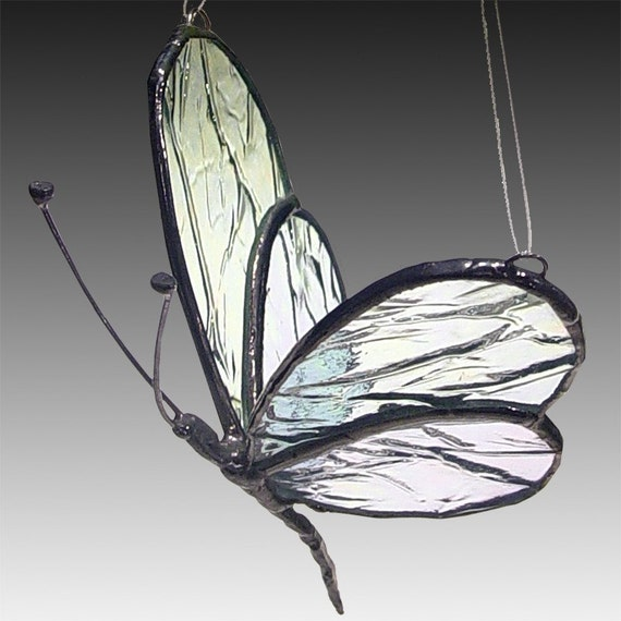 Glass Winged  Butterfly - Iridescent