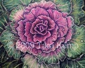 Botanical Illustration Greeting Card -  Purple Cabbage