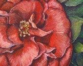 ACEO 2.5 x 3.5 Fine Art Print - First Camellia