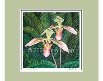 Wild Orchid Twins - Archival botanical 8x8 signed print in a 12x12 mat from original drawing by Tara Kemp