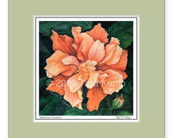 Hibiscus Couture - Archival botanical 8x8 signed print in a 12x12 mat, from original drawing by Tara Kemp