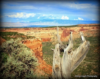 Colorado National Monument. Matted photograph