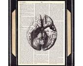 ANATOMICAL BRAIN art print human anatomy medical science doctor neurology psychology dictionary book page illustration wall decor 8x10, 5x7