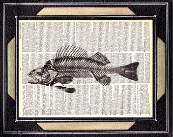 FISH SKELETON art print wall decor anatomy marine life natural science nautical black white on upcycled vintage dictionary book page 5x7""