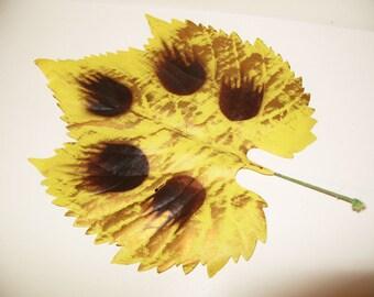 "8"" Vintage Millinery Flower Grape Leaf Yellow & Bronze Metallic"