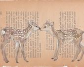 Fawns - postcard