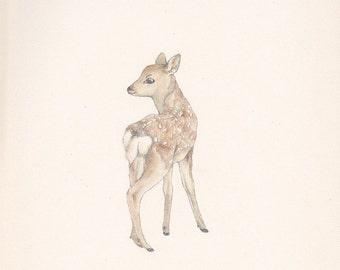 A little fawn - postcard