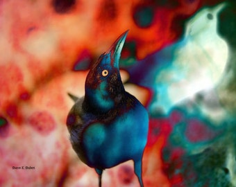 Grackle Bird Art, Southwestern Photomontage, Crow Totem Animal, Red Blue, Woodland Home Decor, Wall Hanging, 8 x 10, Giclee Print