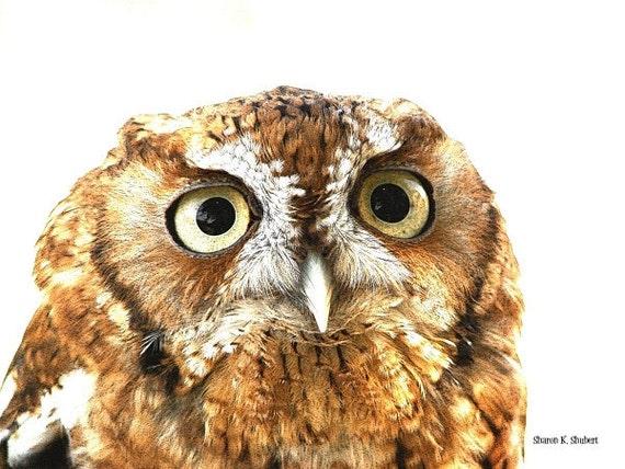 Elf Owl Art, Bird of Prey, Earth Tones, Woodland Animal, Wildlife Wilderness, Home Decor, Rustic Wall Hanging, Giclee Print, 8 x 10