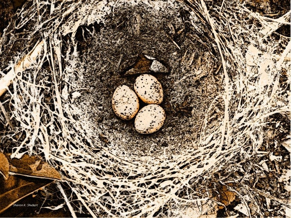 Bird Nest Eggs Art, Rustic Decor, Sepia and Brown Digital, Woodland Wildlife, Wall Hanging, Cabin or Home Interior, Giclee Print, 8 x 10