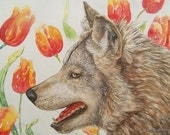Gray Wolf Amongst Tulips, Original Fine Art  Watercolor Painting