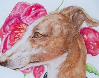 Greyhound Dog, Flora and Fauna, Fine Art Print 5 x 7