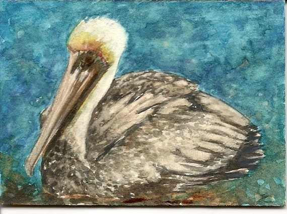 Brown Pelican ACEO Card