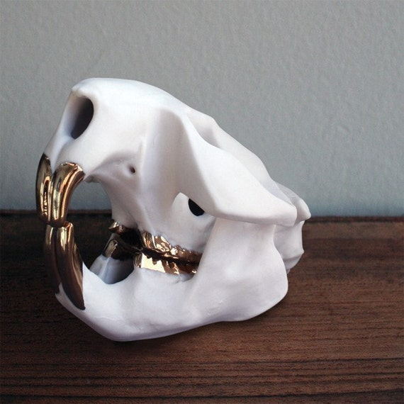 Porcelain Beaver Skull with 18k gold luster teeth