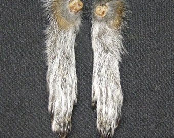 SQUIRREL FEET (silver fur) real animal paws for taxidermy crafts, art projects, jewelry and doll making