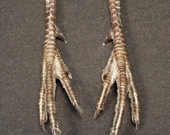 PHEASANT LEGS real bird feet/talons for taxidermy crafts, art projects, jewelry and costume making