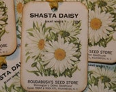 Shasta Daisy Vintage Seed Packet Gift Tags