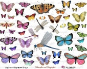 bUttERfLiEs aNd dRaGoNfLiEs - Digital Collage Sheet (no 228)