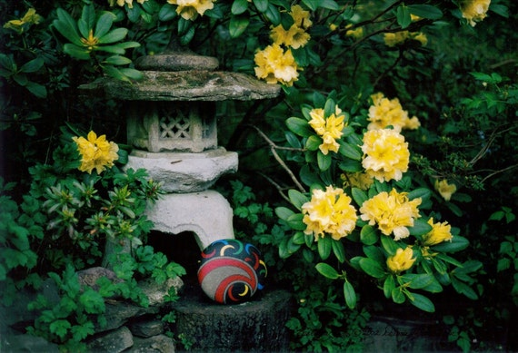 Flower Photography with Japanese Lantern Yellow Rhododendrons Rock Art A Collectible Home Trends Still Life Photograph Unique Gifts for Him
