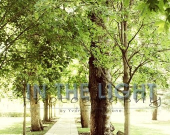 Notre Dame campus walkway - fine art photography