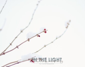 Bright Snow Berries 2 - fine art photography