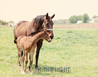 Mother and Son Horses - fine art photography