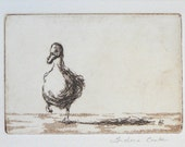 original etching with aquatint 'ducky duck'