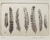 original etching of a group of feathers