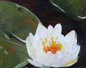 Water Lily 6x6 Original painting